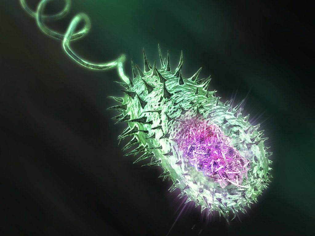 Прокариоты - это... прокариоты и эукариоты :: syl.ru