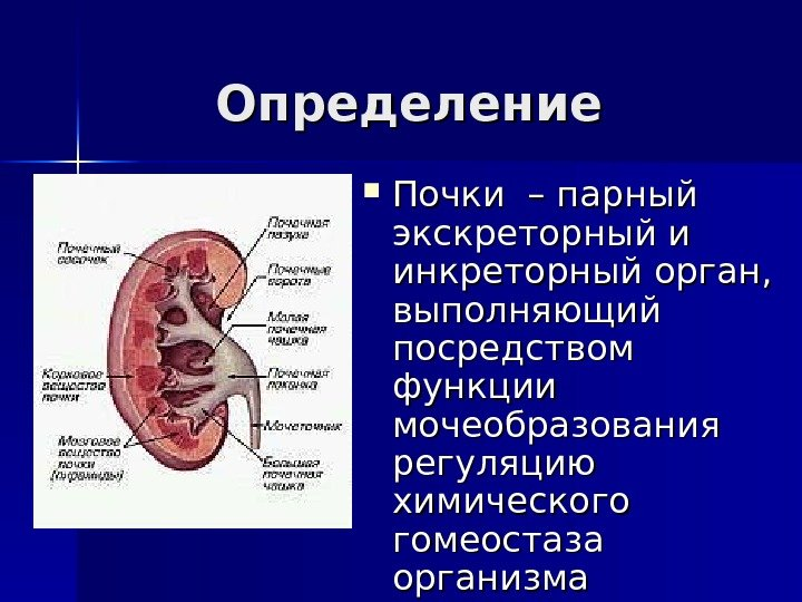 Почка (анатомия)