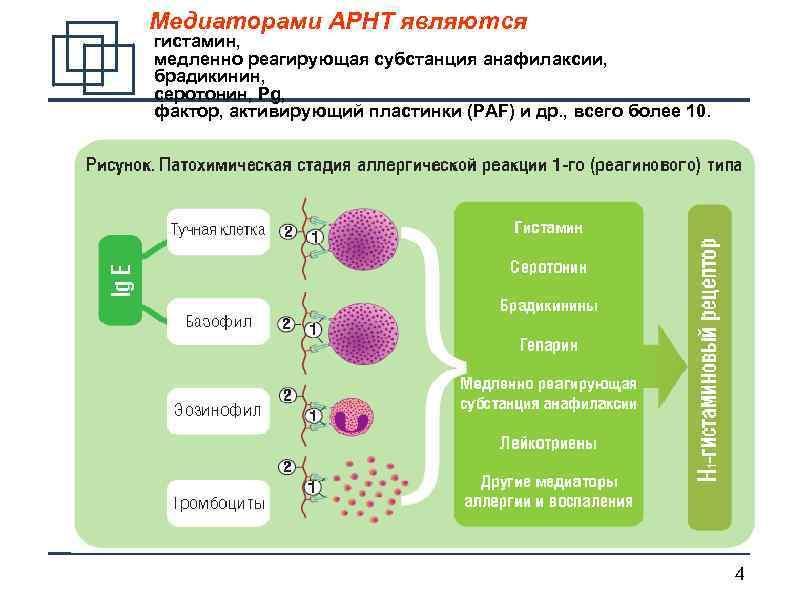 Гистамин: описание и роль в человеческом организме