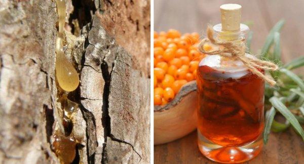 Живица кедровая: лечебные свойства, применение, для лица, для суставов