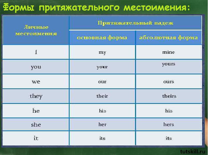 Притяжательные местоимения в русском языке - obrazovane