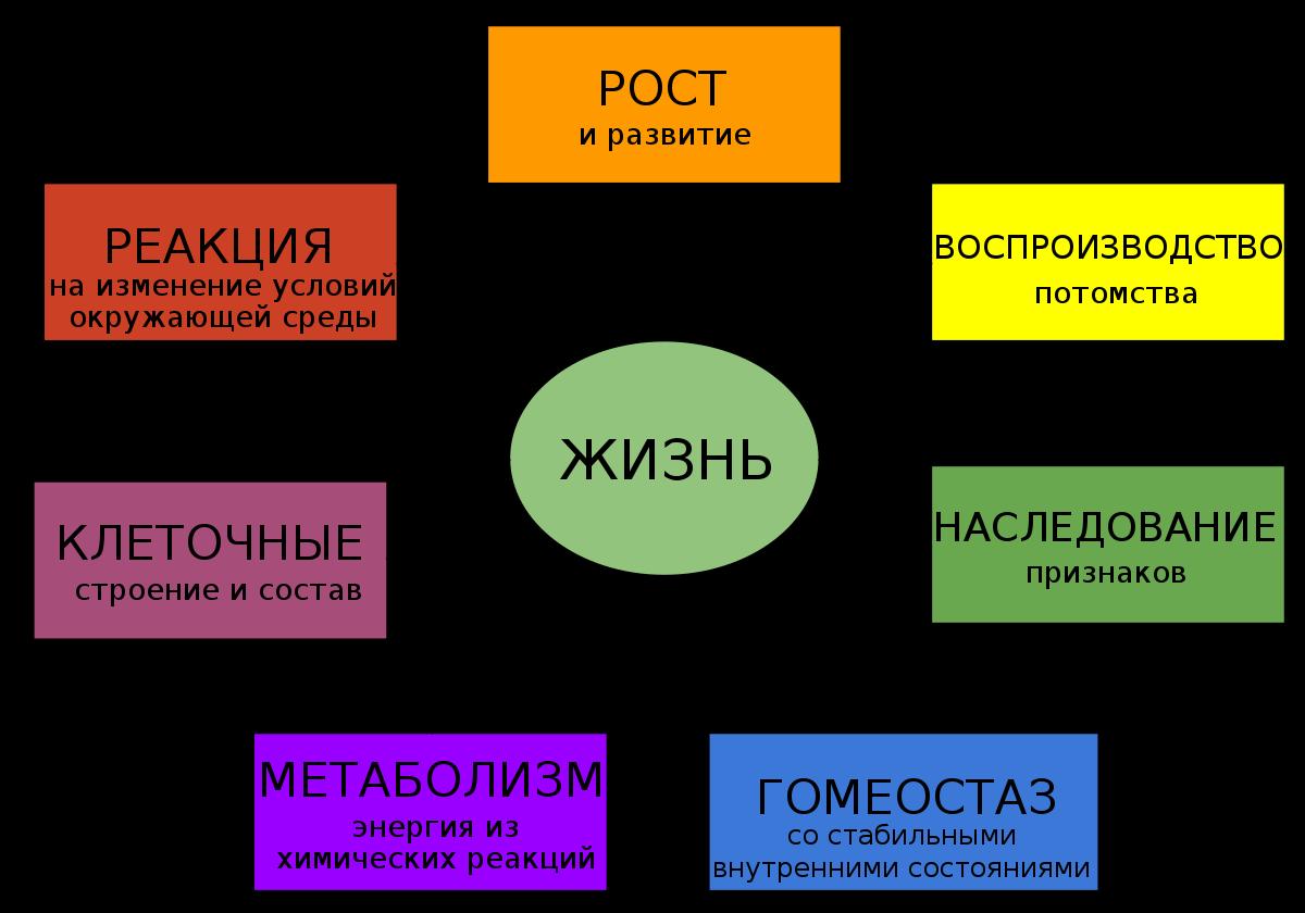Что такое обмен? значение слова