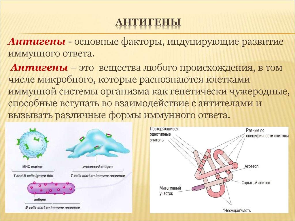 Антиген - вики