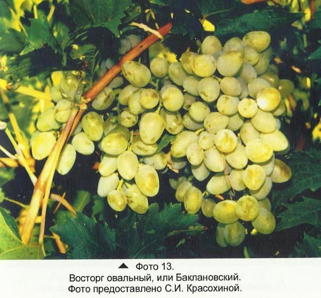 Кизил - полезные свойства  и противопоказания ягод и косточек