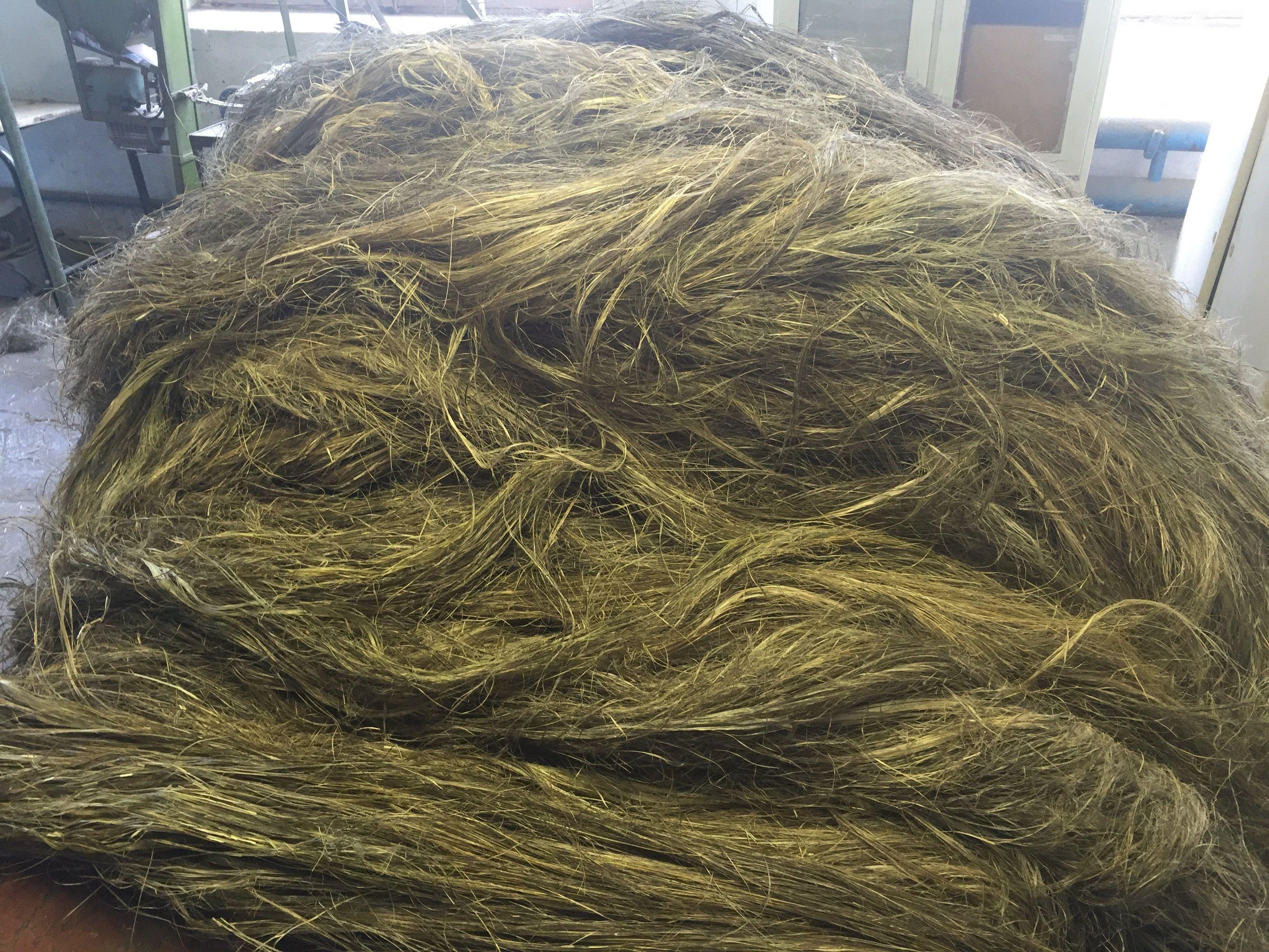 Пенька - что это такое и из какого растения изготавливают, свойства одежды из прядильного волокна и веревок
