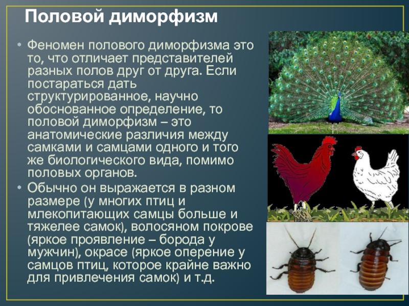 Сексуальный диморфизм • ru.knowledgr.com