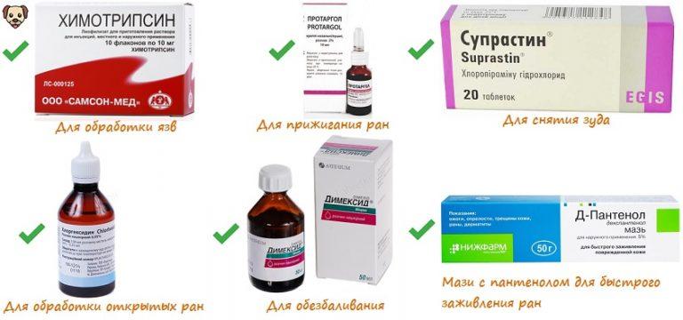 Золотистый стафилококк. симптомы, причины и лечение стафилококка