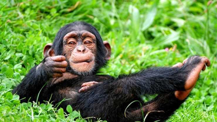 Мартышка: описание животного, чем питаются, сколько живут
