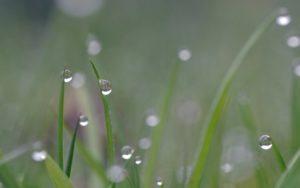 Мистическое явление природы. что такое роса? : labuda.blog мистическое явление природы. что такое роса? — «лабуда» информационно-развлекательный интернет журнал