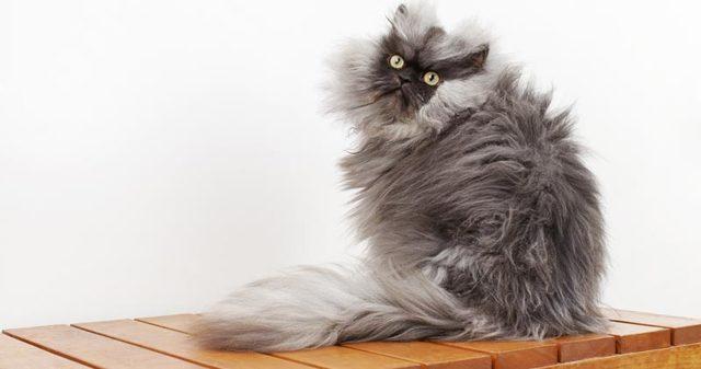 Фурминатор для кошек и собак: что это такое, как выбрать, как пользоваться