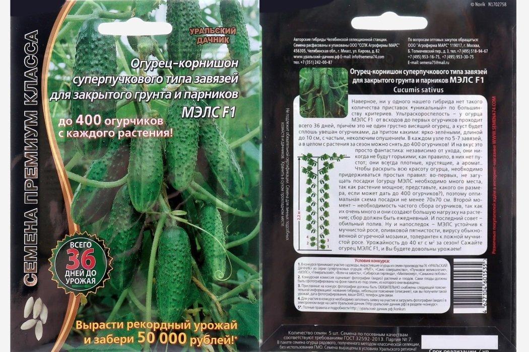 Корнишоны: описание, польза, применение в кулинарии | наш сад