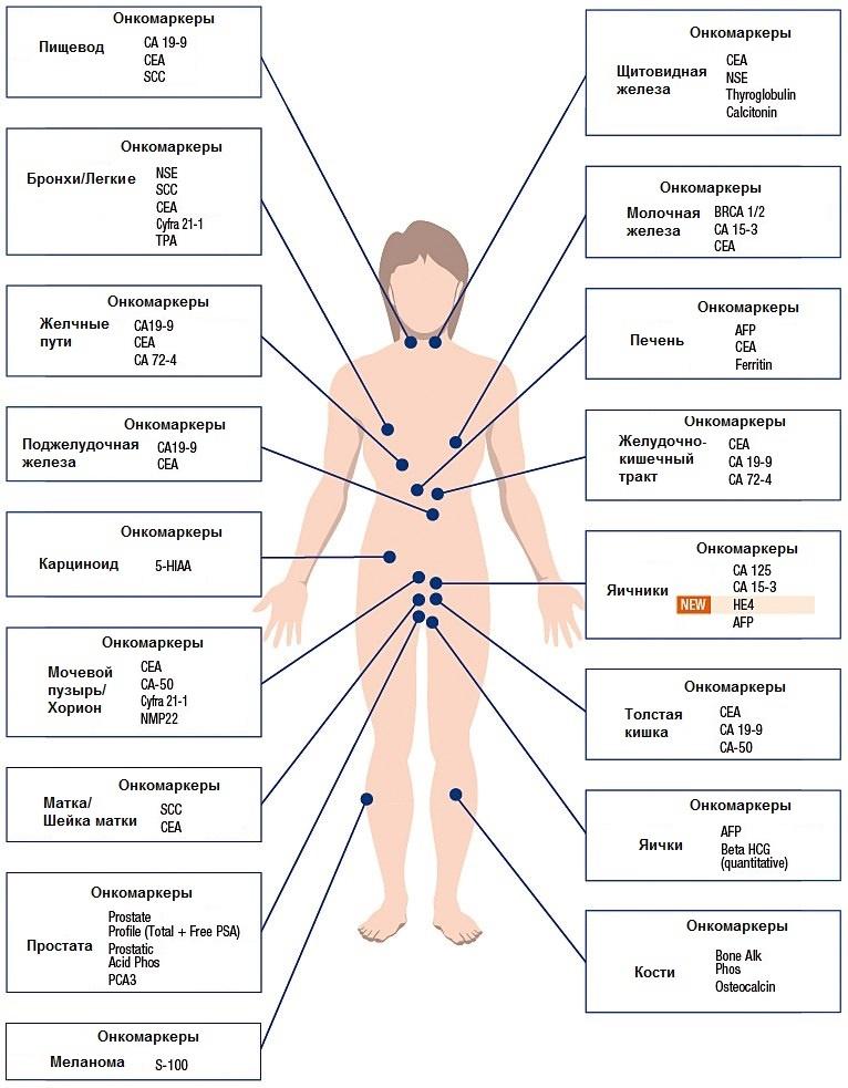 Об онкомаркере са 125: расшифровка результатов анализа, норма у женщин и мужчин. почему он может быть повышен?