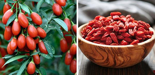 Польза и вред ягод годжи - как правильно принимать
