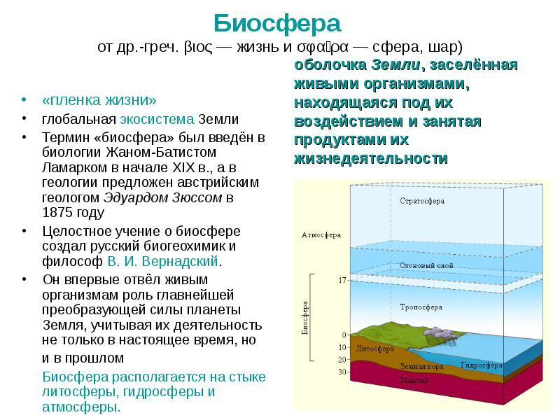 Что такое биосфера, каковы ее составные части и чем она отличается от других оболочек земли?