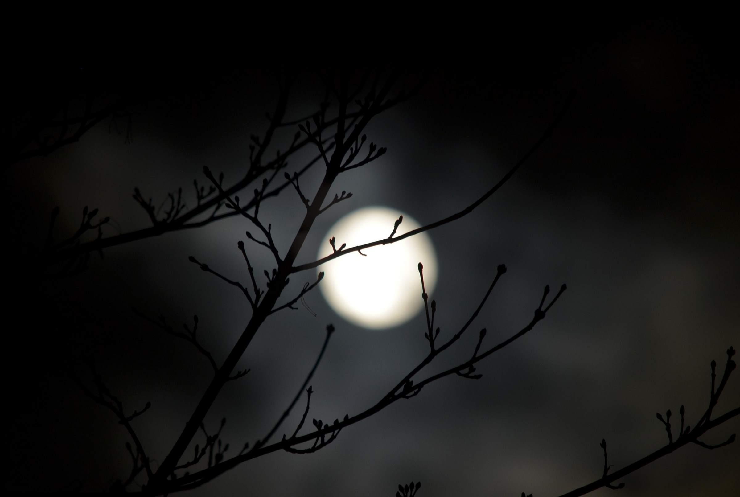 Таинственная темнота: жуткое явление  | potu-storony.ru