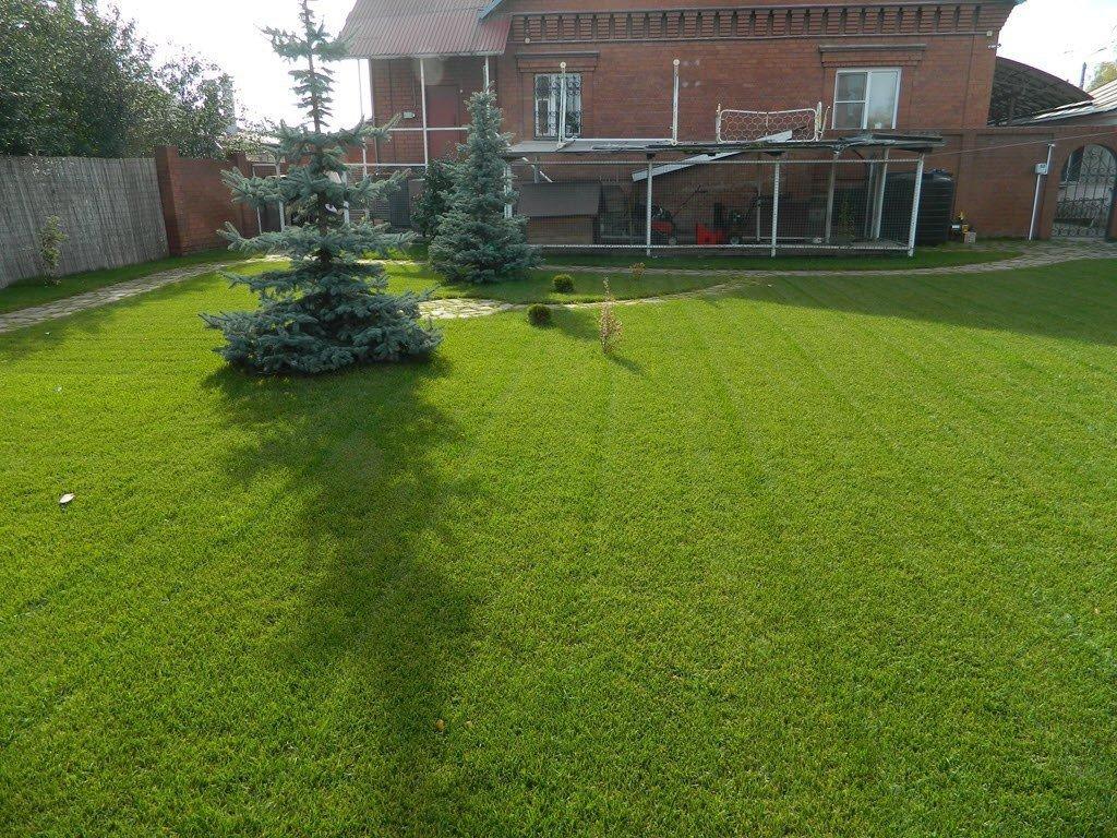 Изумрудная лужайка за один сезон с помощью жидкого газона