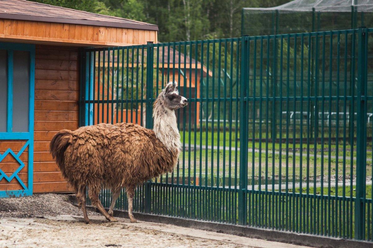 Что такое современный зоопарк  •  arzamas
