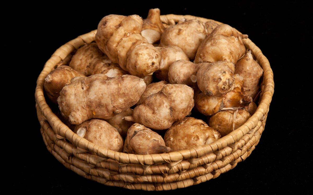 Топинамбур: что такое, как выглядит иерусалимский артишок и подсолнечник клубненосный на фото, где земляная груша семейства астровых растет в россии, овощ ли это?