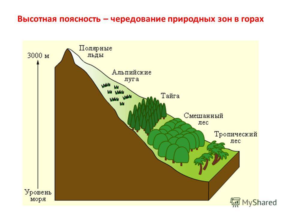 Высотная поясность – области, причины возникновения, определение (география, 7 класс)