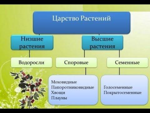 § 54. систематика растений. низшие растения | 8. многообразие органического мира | естествознание и основы экологии | литература / наша-природа.рф
