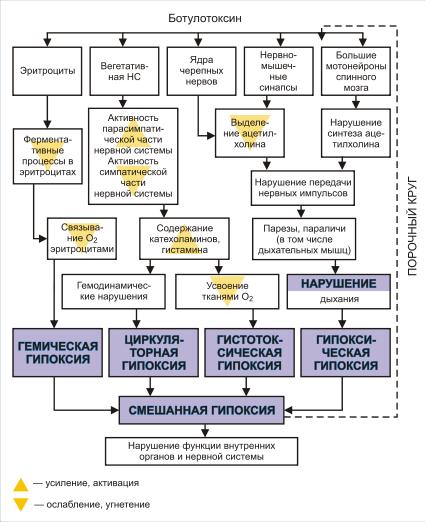 Отравление. классификация отравлений. причины, виды, симптомы и признаки пищевых отравлений
