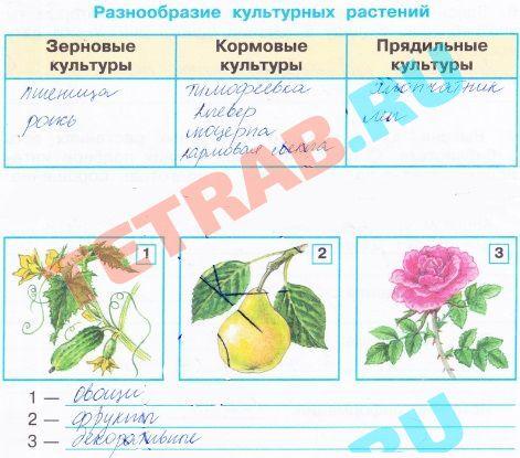 Центры происхождения культурных растений. конспект - учительpro