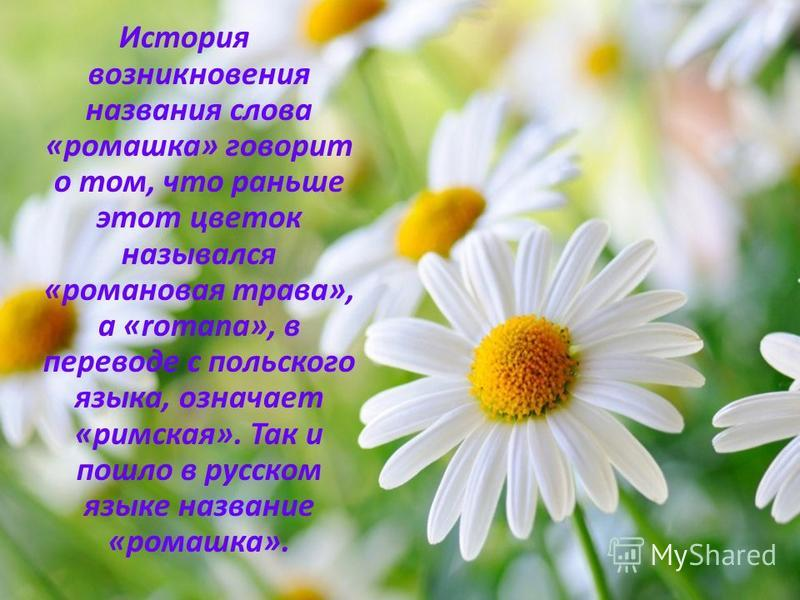 Цветок — википедия. что такое цветок