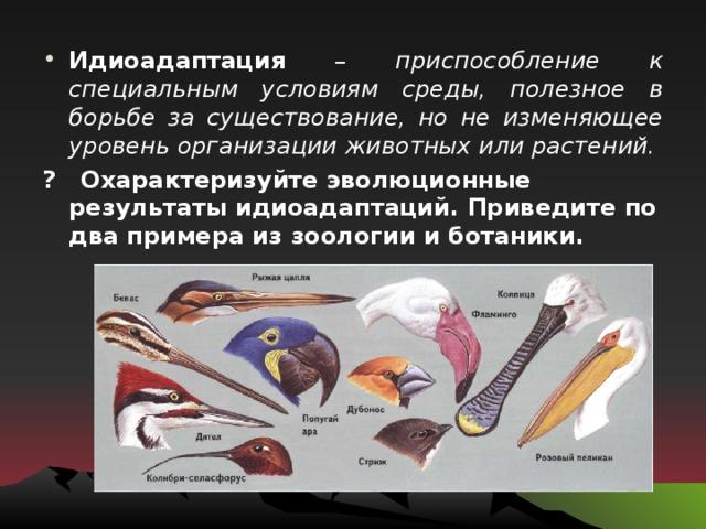 Признаки и примеры идиоадаптации :: syl.ru