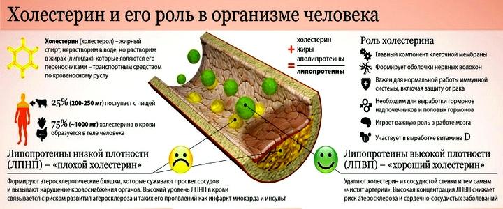 Плохой холестерин: норма в крови, таблица, как снизить