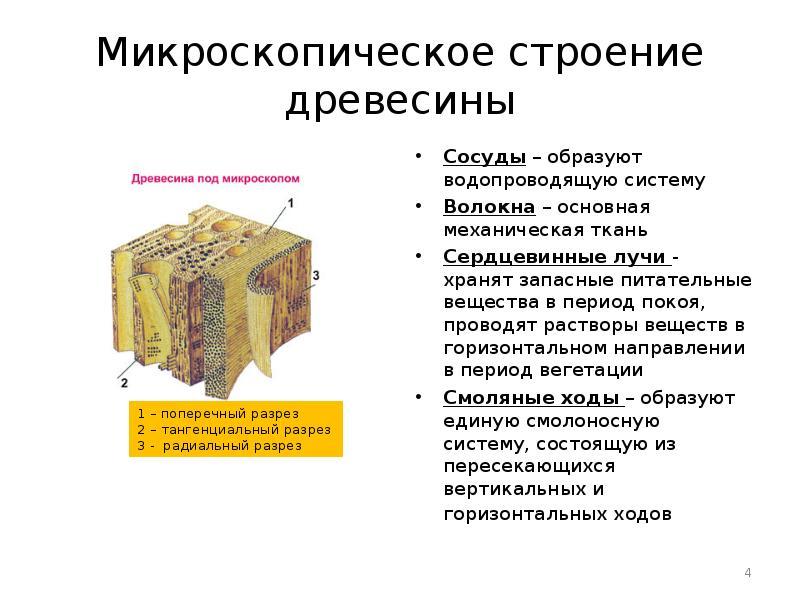 Что такое древесина