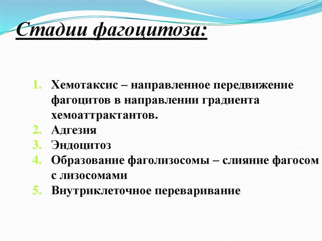 Фагоцитоз - phagocytosis