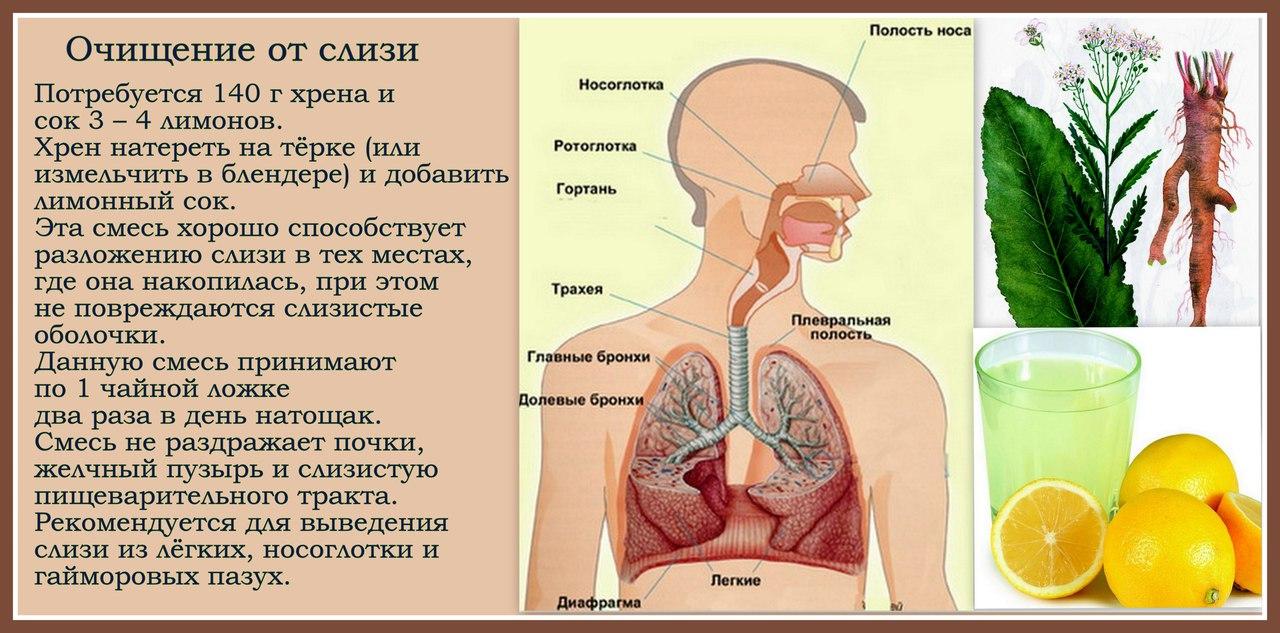 Альвеолит   симптомы   диагностика   лечение - docdoc.ru