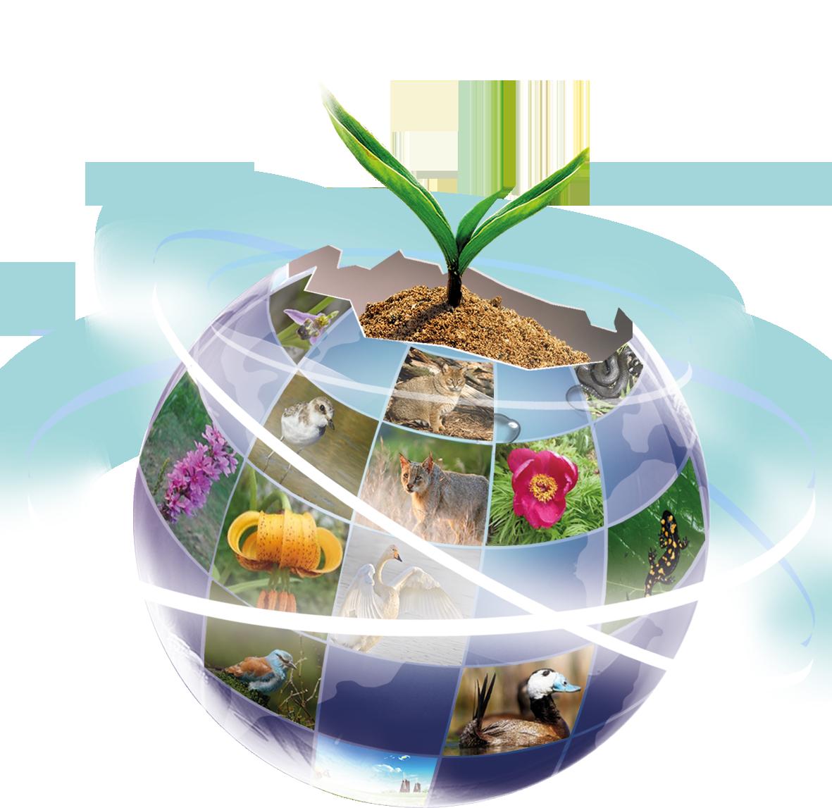 Биоразнообразие — википедия с видео // wiki 2