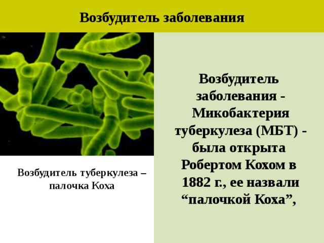 Туберкулезная болезнь: борьба с туберкулезной бактерией, палочкой коха