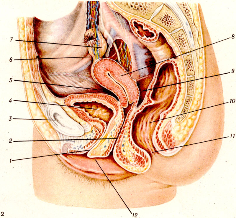 Что такое бужирование уретры и как проводится эта процедура