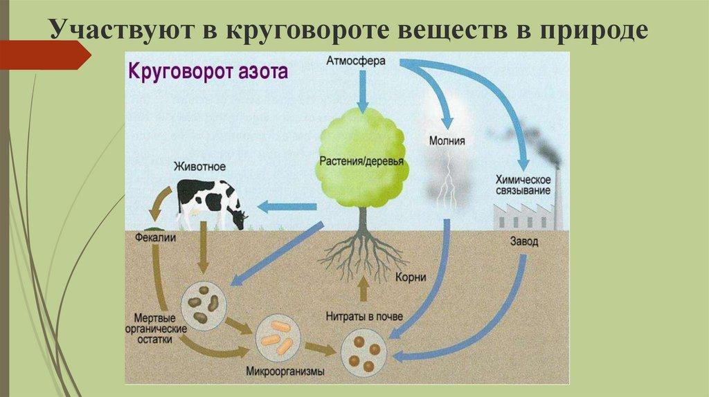 Круговорот веществ в природе – кратко о модели в таблица, роль человека в схеме (3 класс)