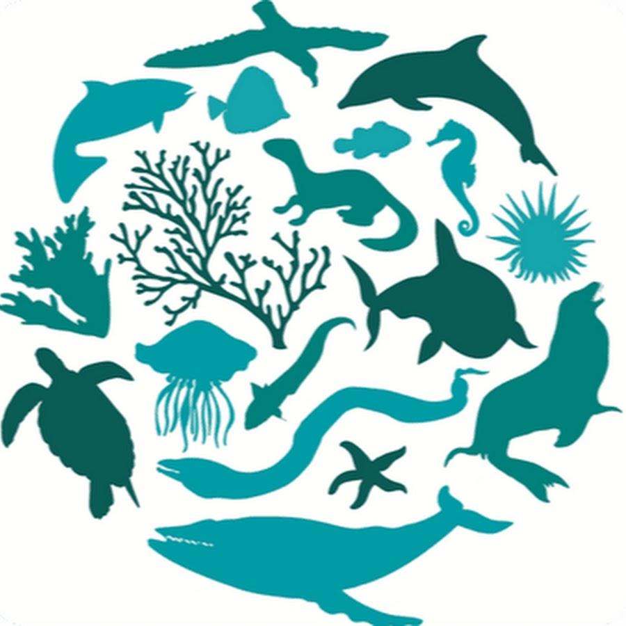Почему важно биологическое разнообразие?