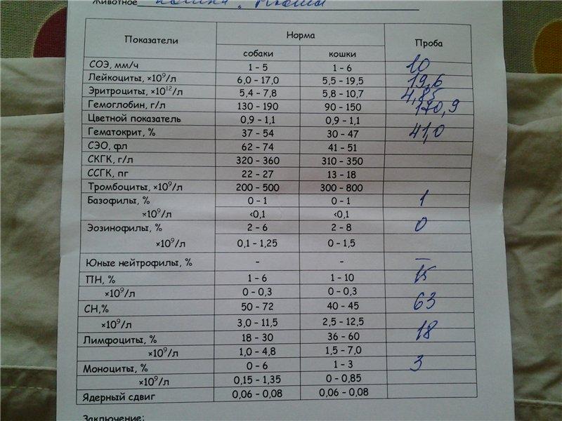 Эозинофилы в крови: что это, нормы по возрасту в таблице