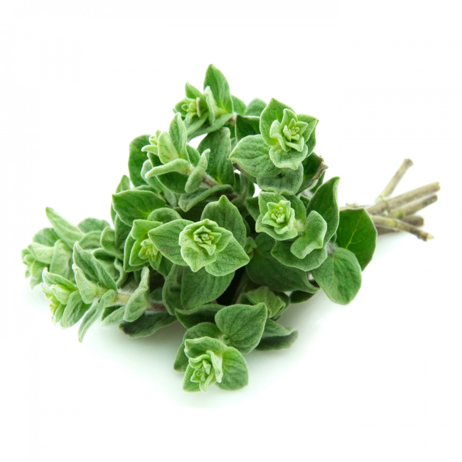 Орегано - что это такое, полезные свойства травы и в какие блюда добавляется душица обыкновенная