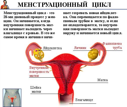 Цикл месячных (менструальный). норма дней у женщин после 30-40 лет, девушек. как правильно считать, почему стал короче, причины