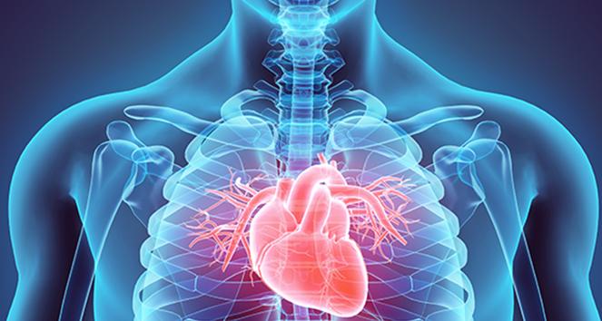 Проведение непрямого массажа сердца: техника, показания и прогноз