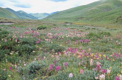 Флора и фауна — это что такое?