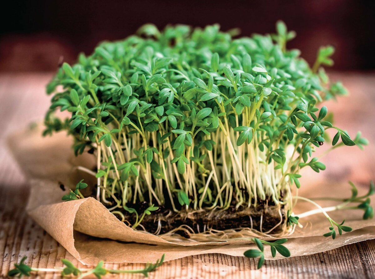 Что такое микрозелень (микрогрин) и чем она полезна | paulinemour | яндекс дзен