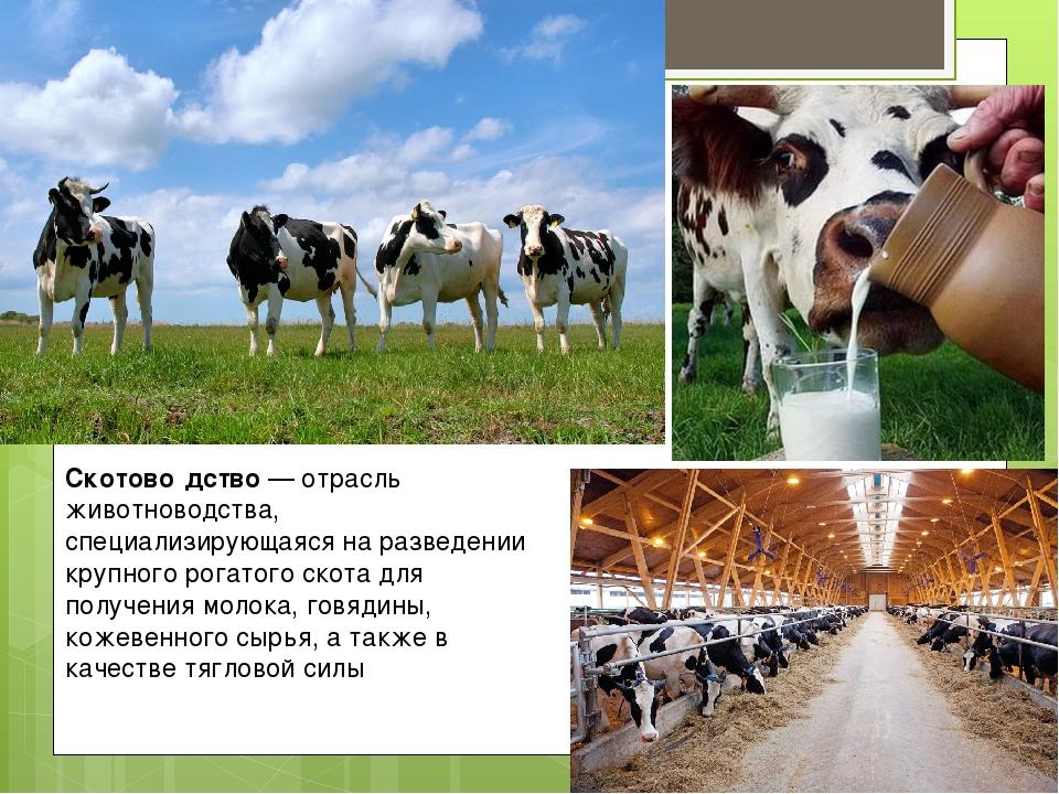 Виды животноводства: перспективы и проблемы развития — cельхозпортал