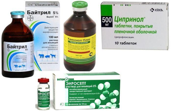 Золотистый стафилококк, что это такое и как лечить? симптомы и лечение антибиотиками у взрослых