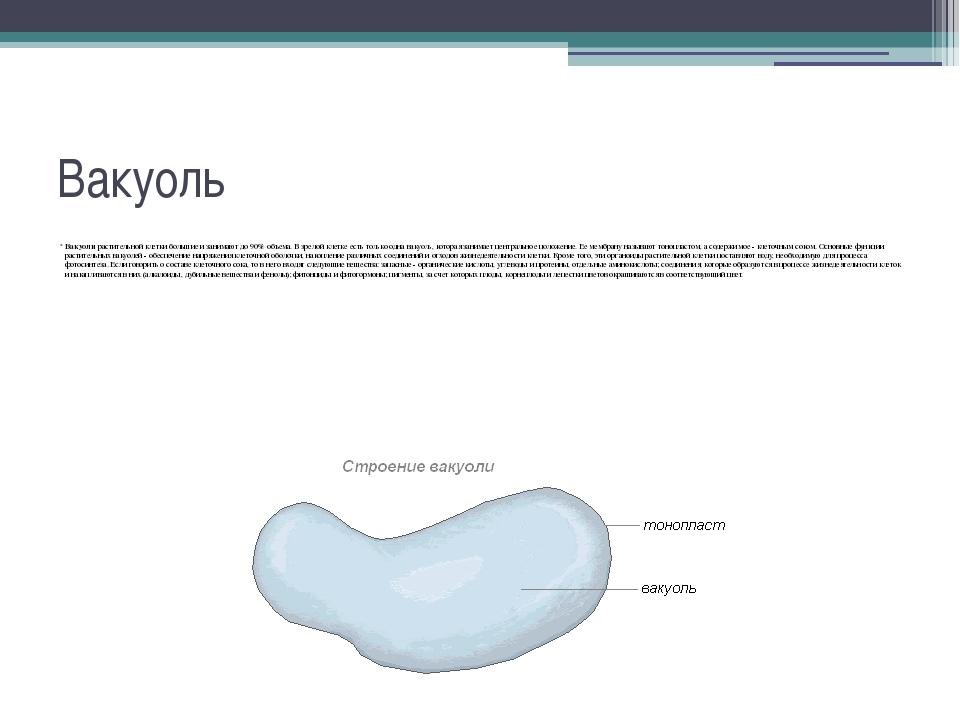 Вакуоли: их строение, функции и роль в клетке