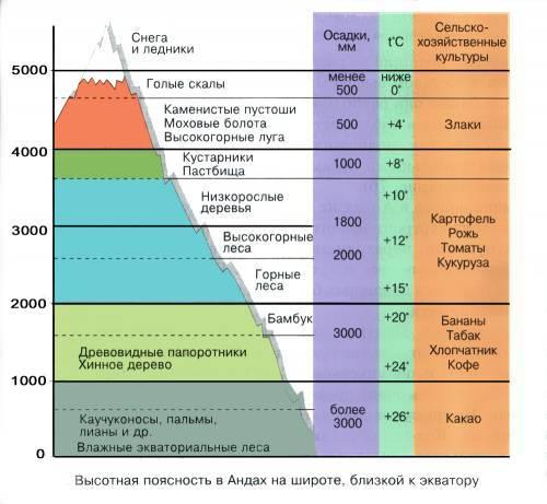 Чем отличается широтная зональность от высотной поясности: примеры