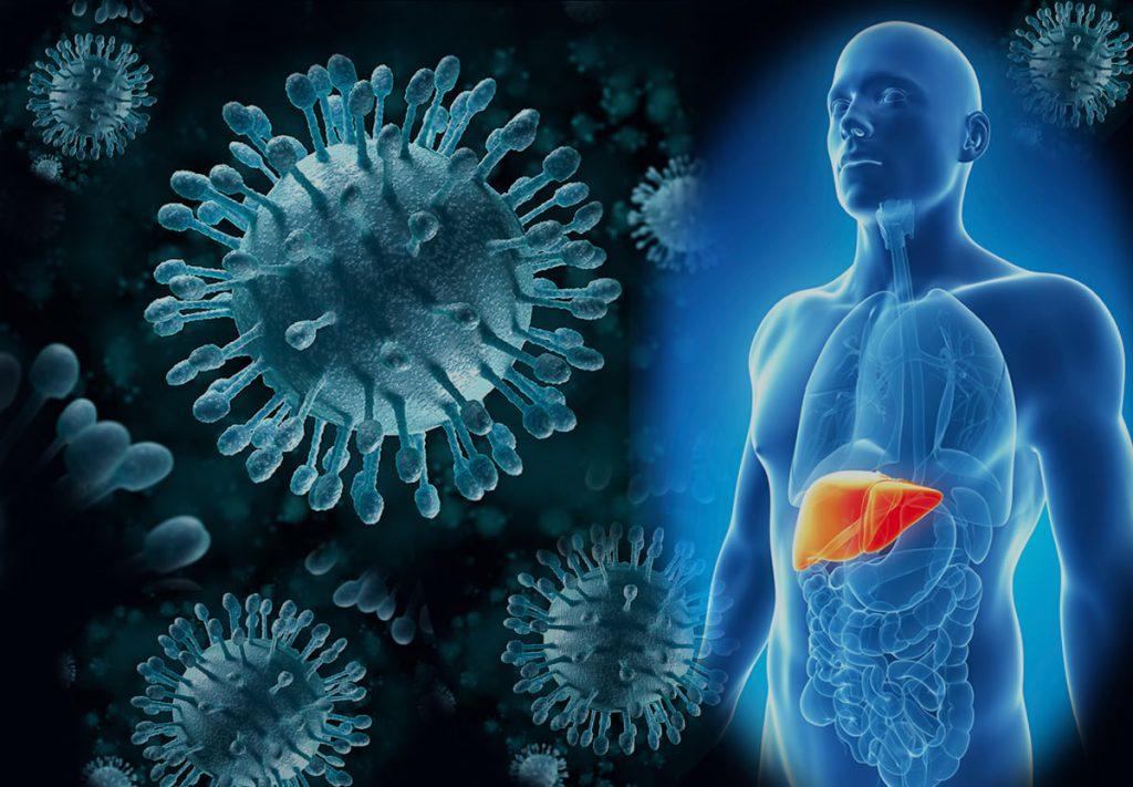 Гепатит а, б и с: что это такое, как передаются и в чем отличия