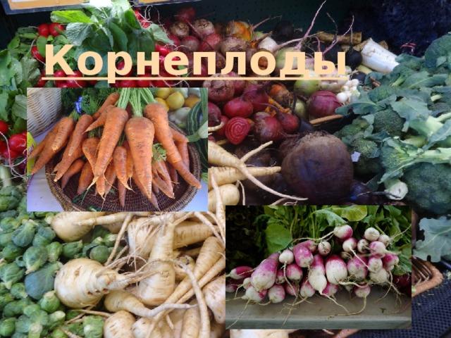 Корнеплоды: список овощей, у которых едят корни. как называются такие плоды? какой корнеплод является самым ранним?