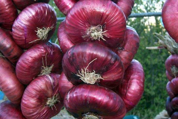 Все о луке-севке, характеристики лучших сортов, как сажать и выращивать